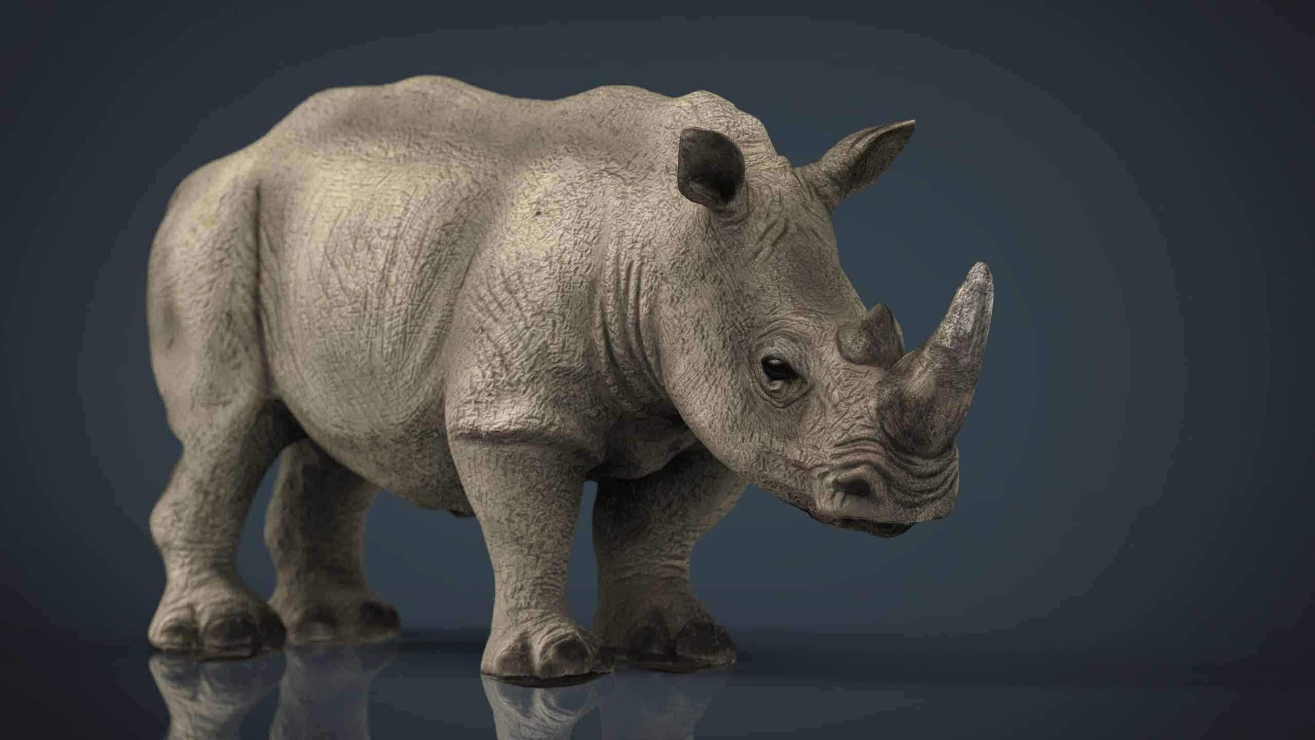 Rhinoanatomy scaled
