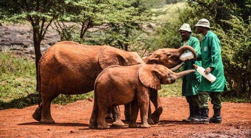 David Sheldrick Wildlife Trust 870x480 1
